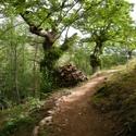 Nettoyage des sentiers de randonnées